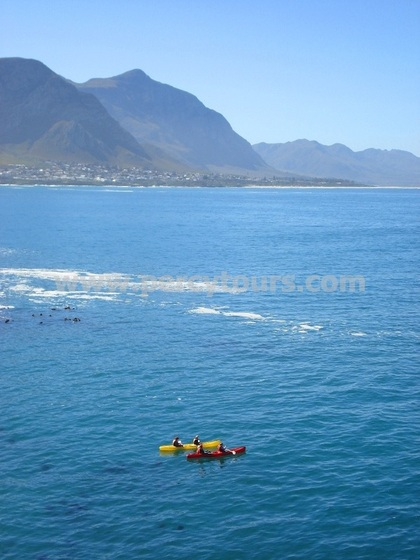 Kayaking with the Whales, Hermanus, Walker Bay, South Africa