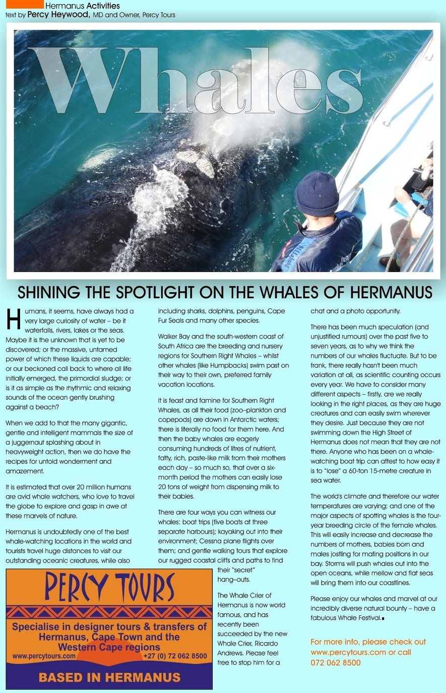 Whale watching article in Whale Talk magazine, Hermanus
