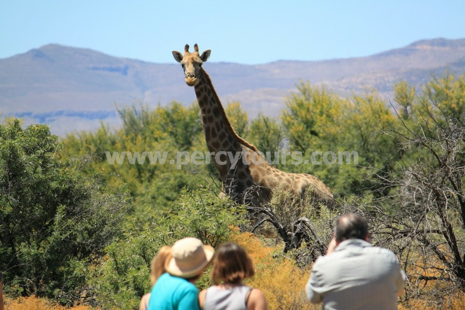 Safari Tours near Hermanus and Cape Town, South Africa